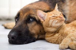 شیوع مجدد برخی بیماریها در حیوانات خانگی