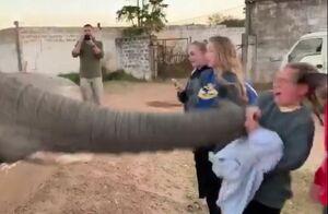 فیلم/ عاقبت فیلم گرفتن از فیل
