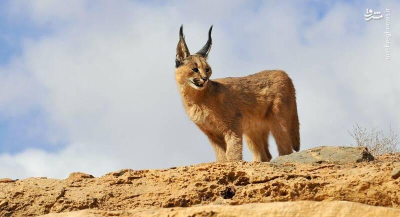 منطقه شکار ممنوع مرور میبد_ یزد