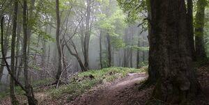 آیا جنگلخواری در هیرکانی پایان مییابد؟