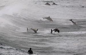 عکس/  همزیستی جالب شناگران و دلفینها