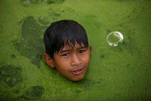 عکس/ شنا کردن در حوضچه جلبک