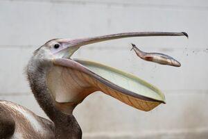 عکس/ آخرین لحظه عمر یک ماهی