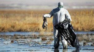ایران از بیماری آنفلوآنزای پرندگان پاک اعلام شد