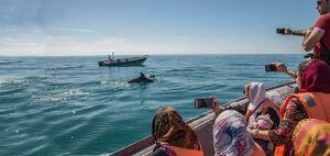 ۳ تور جذاب تابستانی برای مسافرت به بهترین شهرهای ایران