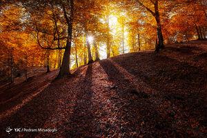 عکس/ سفری جذاب به جنگلهای هیرکانی ایران