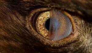 نمای نزدیک از چشم عقاب