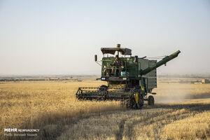 خریدتضمینی گندم ۹درصدکاهش یافت / کشاورزان گندمشان را انبار کردند