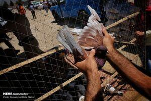 عکس/ بازار پرندگان تهران