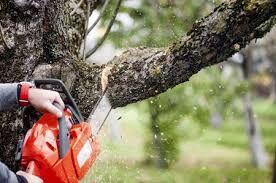 مرگ ۲ تن هنگام قطع کردن درخت