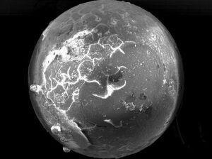 کشف بقایای شهاب سنگ در فسیل صدف +عکس