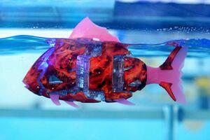 ماهی های رباتی درحال شنا
