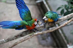 عکس/ بهشت طوطیها کجاست؟
