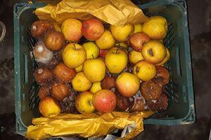 فاسد شدن «یکهزار تن» سیب درختی در دماوند +عکس