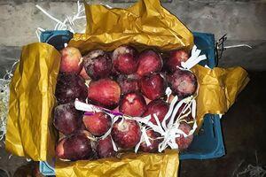 سیب حاوی 100 میکروب مفید برای روده است