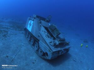 عکس/ موزهای در اعماق دریای سرخ