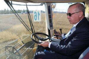 عکس/ رانندگی اردوغان در گندم زار