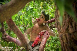 عکس/ اوقات فراغت کودکان روستایی