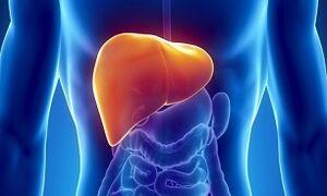 تازهترین عامل سرطان کبد کشف شد