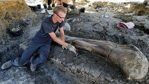 عکس/ کشف استخوان ۴۰۰ کیلویی یک دایناسور