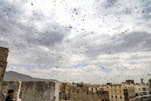 هجوم ملخها به یمن