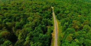 عواقب حضور لاکچریهای آفرودی در جنگلهای هیرکانی