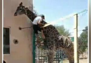 فیلم/ تاثیر مصرف مواد مخدر در باغ وحش!