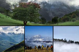 ثبت جهانی، جنگل هیرکانی را نجات میدهد؟
