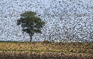 در این عکس چند پرنده وجود دارد!