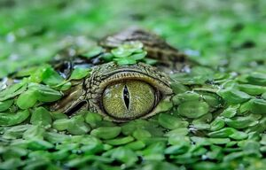 عکس/ استتار خیرهکننده تمساح