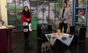 حضور گربه در برنامه زنده تلویزیونی!