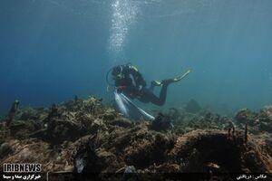 عکس/ جمع آوری زباله از اعماق دریا