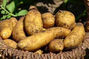 دولت قیمت سیبزمینی را هم نتوانست کنترل کنند/ غذای ارزان مستمندان لاکچری شد +جدول