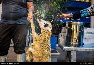 قیمت دام زنده در آستانه عید قربان اعلام شد