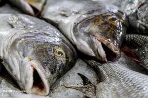فیلم/ سیستمی جالب برای انتقال ماهیها