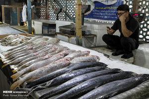 وضعیت بازار فروش ماهی در بندرعباس