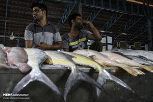 جدول/قیمت انواع ماهی در میادین