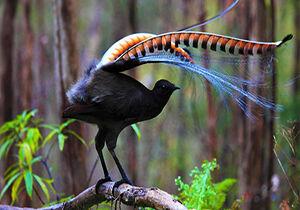 فیلم/ توانایی شگفتانگیز یک پرنده در تقلید صدا