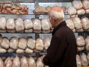 فیلم/ سرقت مرغ از یخچال !