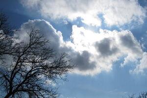 باد، همراه آسمان صاف تهران میشود