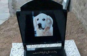 دستگیری عاملان دفن سگ در مسجد +عکس