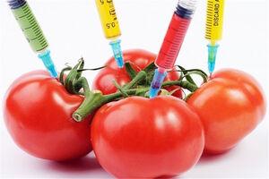 موادغذایی تراریخته عقیم میکند؟