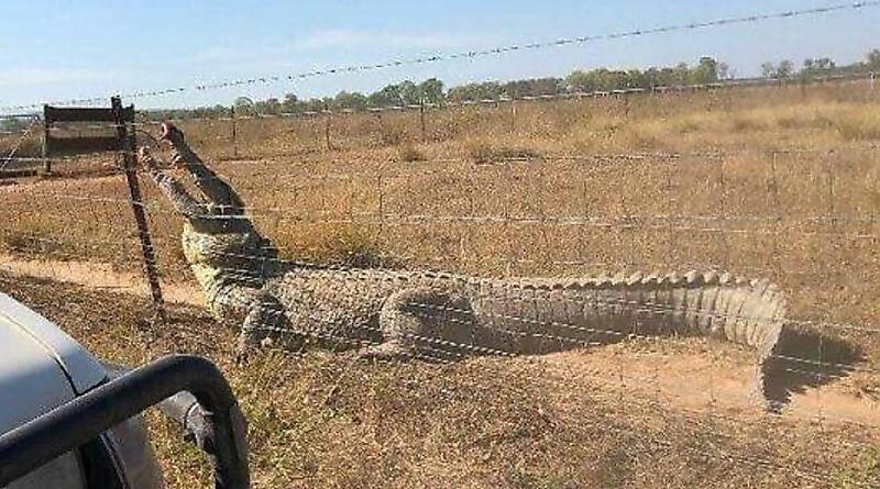سیم خاردارهایی که باعث نجات مرد استرالیایی شد+تصویر