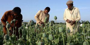 مواد مخدر در افغانستان
