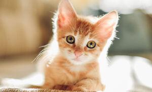 عزاداری چهرهها برای یک گربه!