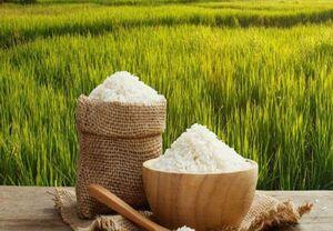 بهترین روشهای نگهداری برنج در خانه
