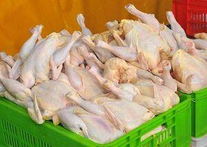 اختلافنظر درباره قیمت مرغ ادامه دارد / دود دعوا در چشم مردم