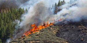عکس/ آتشسوزی جنگلی در جزیره توریستی اسپانیا