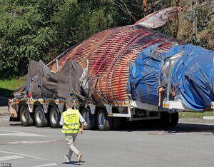 نهنگ ۷۵ تنی