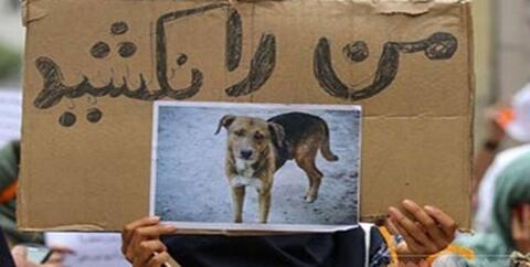 فیلم/ توضیح شهرداری در مورد ماجرای کشتار سگها